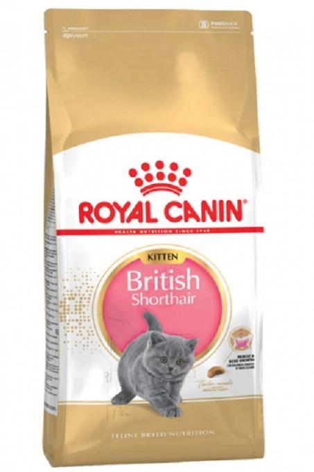 Thức ăn hạt khôn cho mèo con Royal Canin British Shorthair là sản phẩm luôn được trại mèo Dogily Cattery tin dùng.