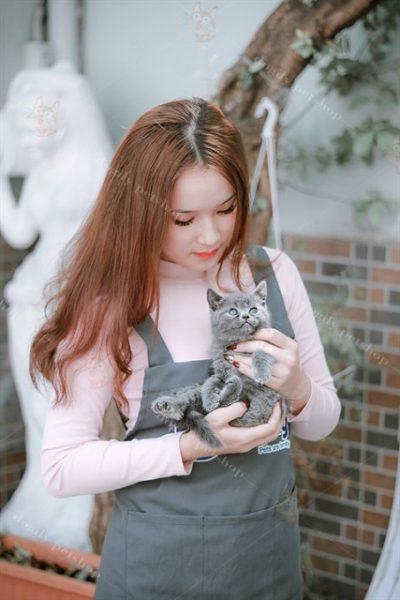 Mèo Anh lông ngắn 2 tháng tuổi