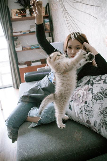 Mèo Aln rất thích chơi trò đuổi bắt với cần câu mèo.