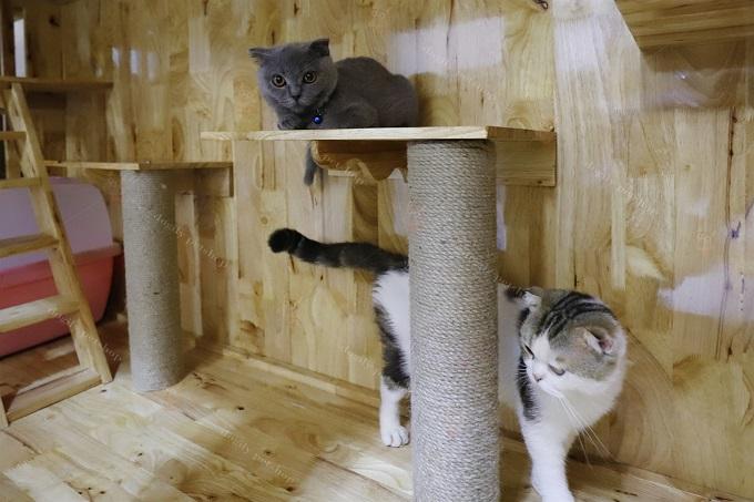 Trụ cào móng bên trong chuồng nuôi mèo của Dogily Cattery.