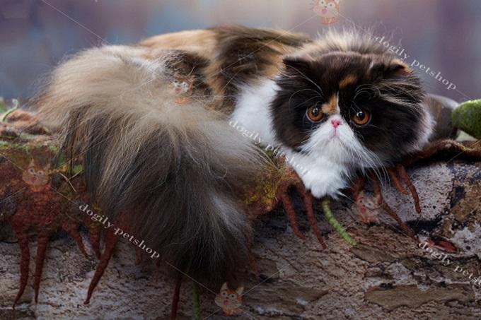 Mèo Ba Tư có bộ lông dài tha thướt rất quý phái.