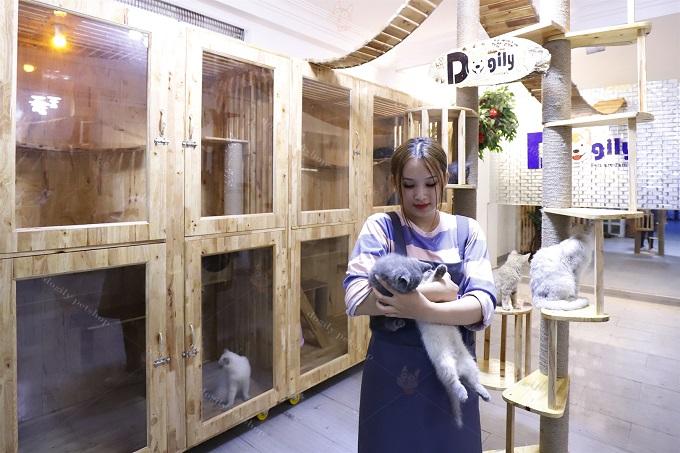 Cách chăm sóc mèo cảnh từ trại mèo Dogily Cattery.