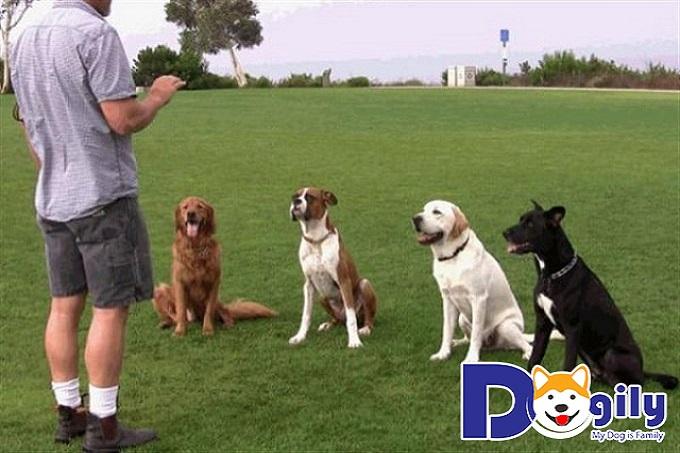 Huấn luyện chó đúng cách, khoa học.