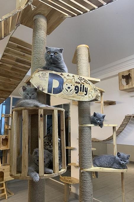 Cây cats tree cho mèo tại Dogily Cattery