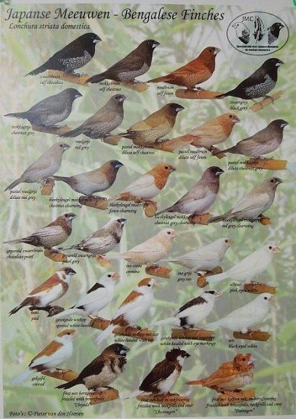 Chim Sắc Nhật