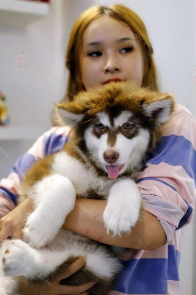 Chó con phát triển như nào đến khi trưởng thành. Các hành vi phổ biến qua từng giai đoạn phát triển của chó con.
