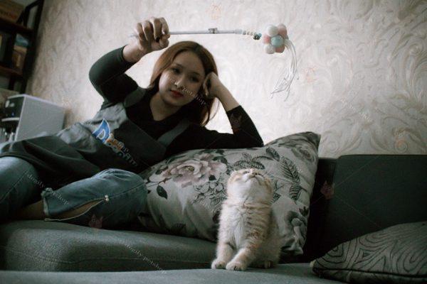 Huấn luyện mèo Anh lông ngắn tại Dogily Petshop.