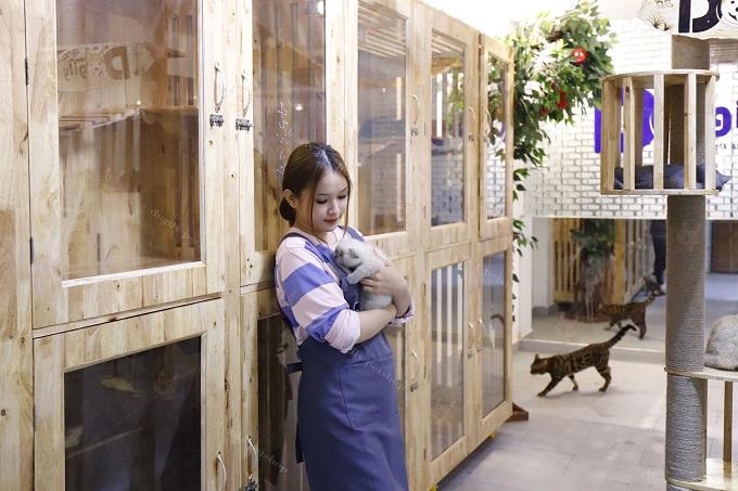 Một góc chuồng nuôi mèo Anh lông ngắn của Dogily Petshop.