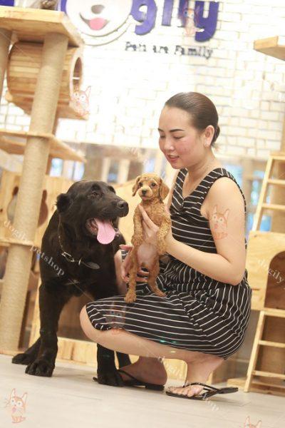 Nguồn gốc và sự thuần hóa loài chó
