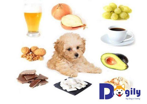 Nhu cầu dinh dưỡng của chó mèo