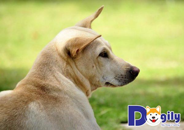 Trước khi nuôi chó bạn cần biết những gì?