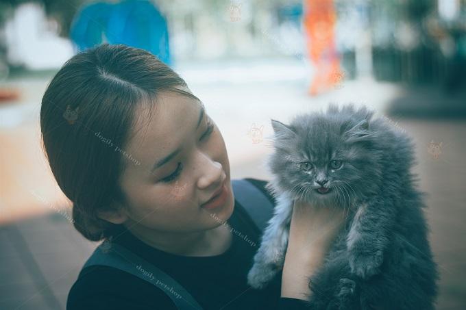 Bạn cần tham khảo kỹ kiến thức về giống mèo Ald trước khi mua nhé.