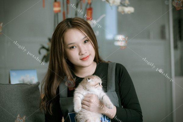 Mèo Scottish Fold rất thân thiện và thích được chủ nhân ôm ấm, vuốt ve.