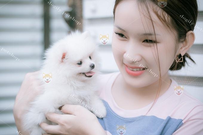 Thân thiện và tình cảm, Pomeranian là một trong những giống chó đồng hành tuyệt vời nhất trên thế giới