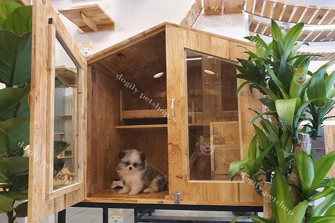 Một mẫu chuồng cho chó Phốc Sóc bằng gõ đang bán tại Dogily Petshop.