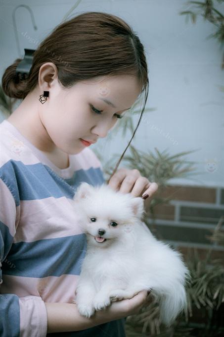 Giữ vệ sinh, bắt ve, rận thường xuyên cho chó Pom. Đặc biệt làm màu trắng. Bạn cần để ý lau nước mắt để bé không bị đau mắt, ố vàng.