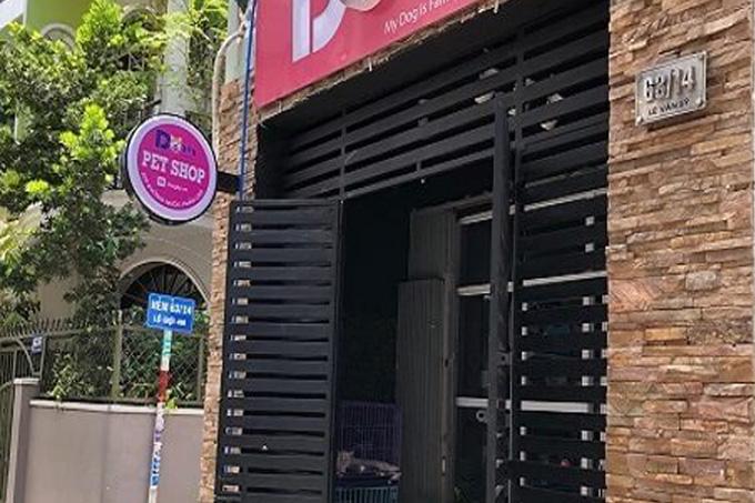 Cửa hàng mua bán chó Labrador Retriever (Lab) Phú Nhuận.