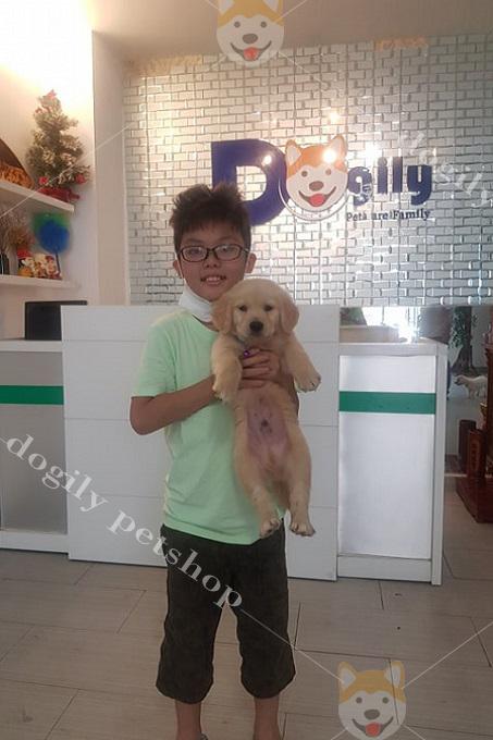 Khách hàng nhí mua chó Golden tại Dogily