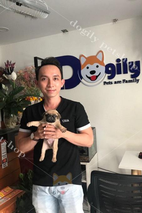 Khách mua chó Pug mặt xệ tại Dogily Pet Shop.
