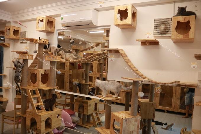 Một góc chuồng nuôi mèo Dogily Cattery
