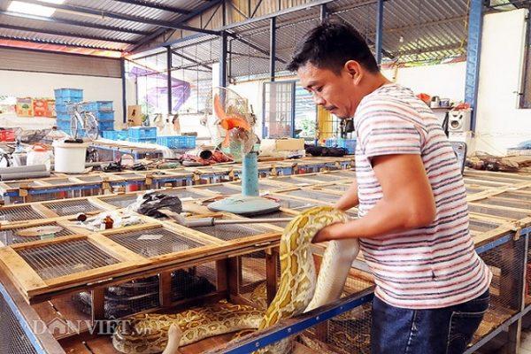 Khu chuồng nuôi trăn quy mô lớn theo tiêu chuẩn