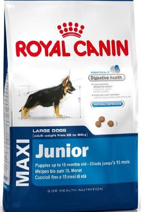 Nên cho Alaska ăn thức ăn hạt Royal Canin Maxi dành cho chó lớn