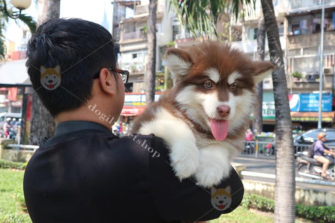 Tiêm phòng vacxin, tẩy giun cho chó theo định kỳ