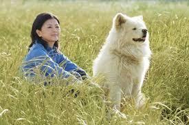 Chú chó lông dài Wasao hòa quyện với con người và thiên nhiên vùng Ajigasawa