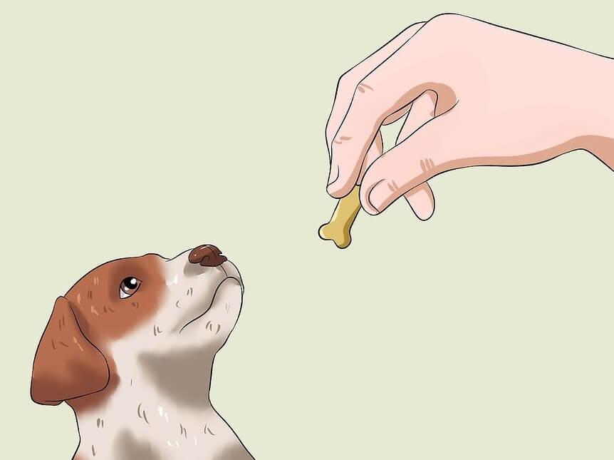 Huấn luyện chó con đi vệ sinh đúng chỗ: khen thưởng kịp thời cho chó
