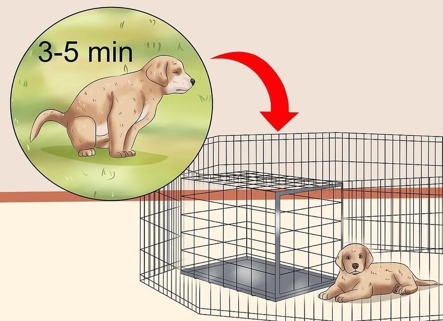 huán luyện chó con đi vệ sinh đúng chỗ:
