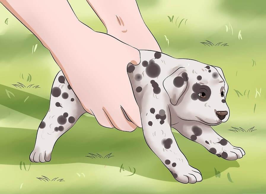 Cách dạy chó đi vệ sinh đúng chố: bạn thường xuyên cho cún cưng ra bên ngoài để chúng có cơ hội đi vệ sinh đúng chỗ một cách tự nhiên nhất