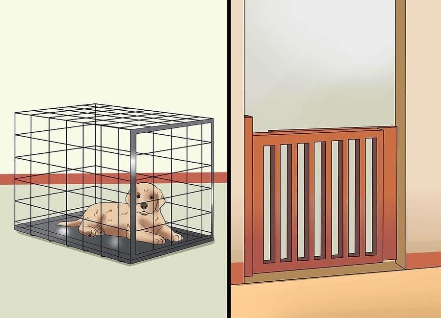 Huấn luyện chó con đi vệ sinh đúng chỗ: