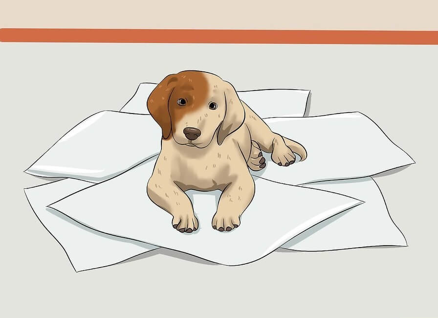 huấn luyện chó đi vệ sinh đúng chỗ: huấn luyện chó đi vệ sinh vào khay hoặc giấy báo
