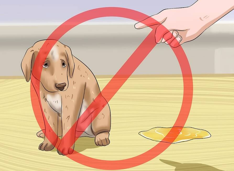 """Không phạt hay đánh mắng khi cún đi vệ sinh bậy trong nhà. Bạn chỉ cần dùng hiệu lệnh """"không"""" để dừng hành vi của chúng lại"""