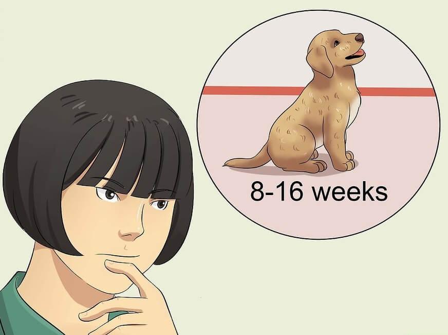 Cách cho chó đi vệ sinh đúng chỗ: Bạn cần nắm cơ chế sinh lý trong việc đi vệ sinh của chó.