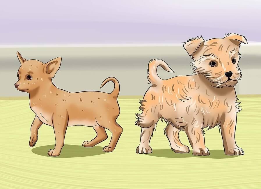 Cách cho chó đi vệ sinh đúng chỗ: Mỗi giống chó khác nhau sẽ có thói quen đi vệ sinh khác nhau