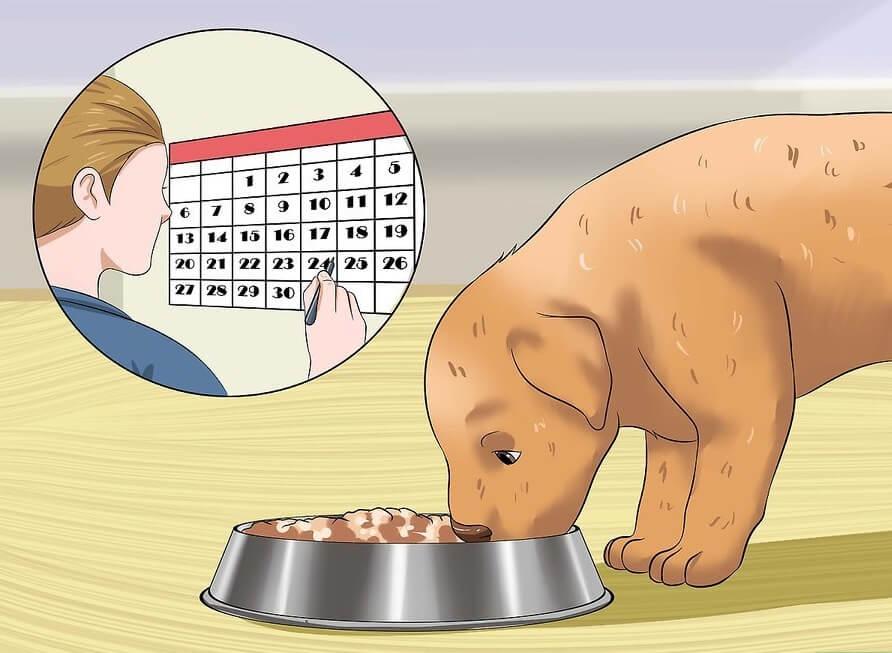 Cách huấn luyện chó đi vệ sinh đúng chỗ: Cho cún cưng ăn đúng bữa theo lịch hàng ngày