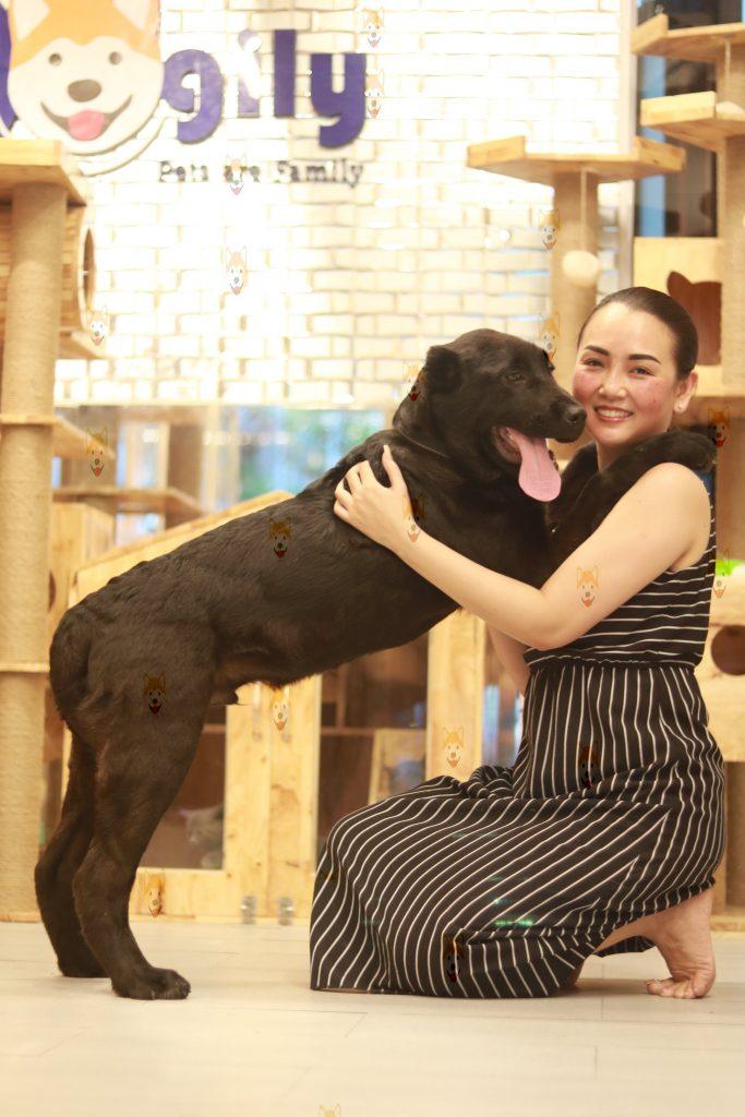 Chó Alabai Khổng Lồ Mua Bán Giá Bao Nhiêu Tại Việt Nam