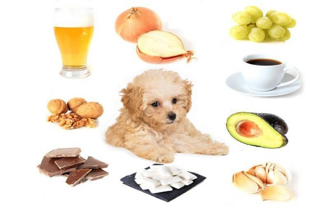 Thức ăn dành cho chó lông xù