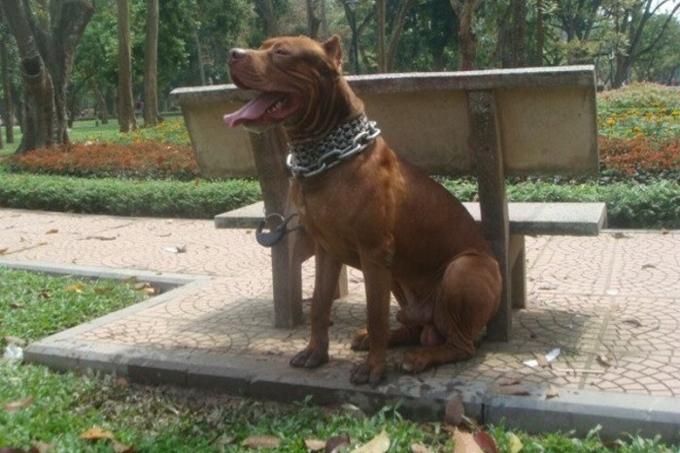 Trại chó Bình Xoáy Thái - Cửa hàng bán chó cảnh uy tín tại Hà Nội