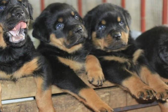 Cửa hàng bán chó cảnh uy tín Ba Dương