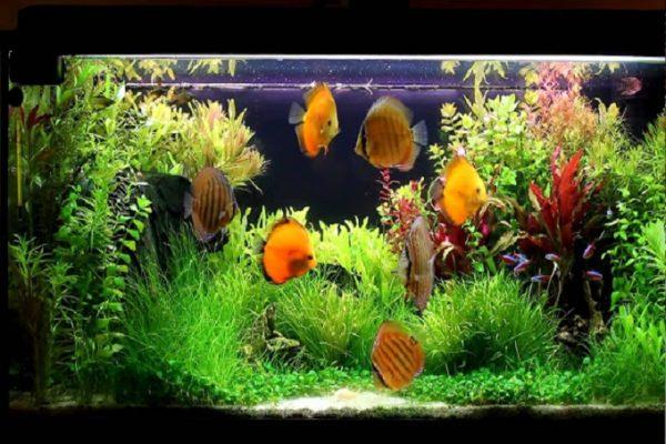 Hồ nuôi cá đĩa