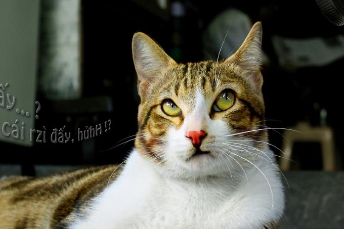 """Chỉ người nuôi mèo mới biết """"hoàng thượng"""" chảnh thế nào"""