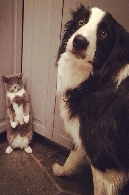 Mèo luôn tỏ ra ngây thơ vô số tội