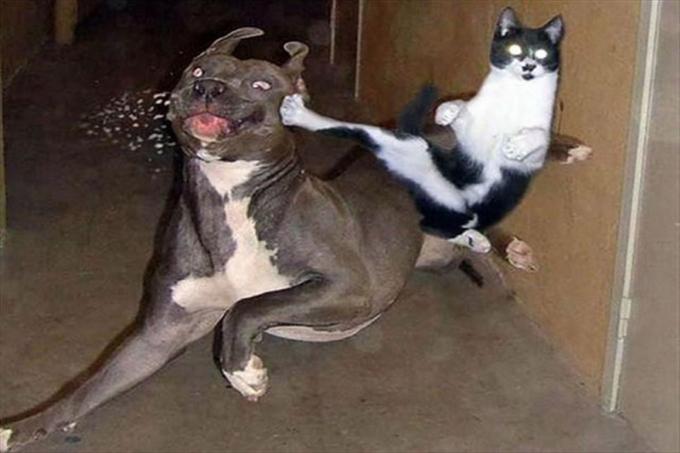 Người nuôi mèo sẽ biết chúng mới chính là chúa tể đích thực