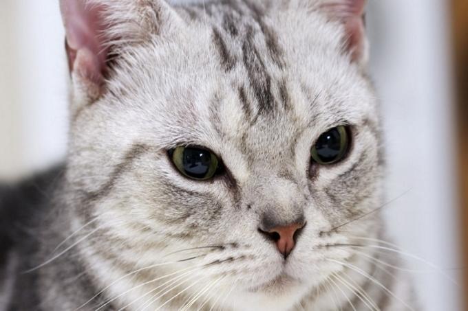 Đôi lúc mèo sẽ nhìn chằm chằm vào bạn một cách rất đáng sợ