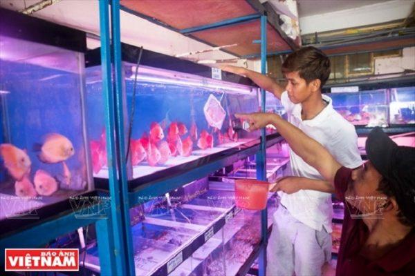 Nước nuôi cá đĩa