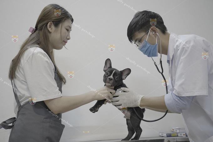 Bác sĩ thú y thăm khám cho chó mèo tại khách sạn Dogily Pets Hotel.