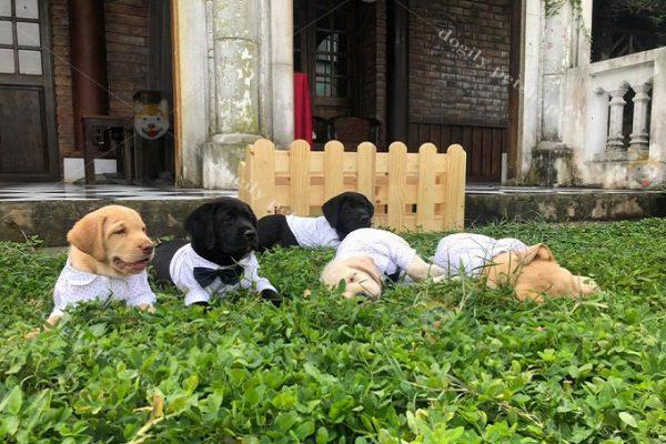 Cách chăm sóc chó kiểng