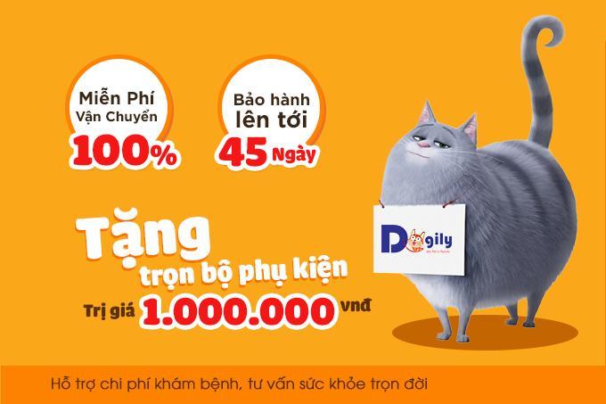 Chính sách hỗ trợ khi mua mèo Aln tại Dogily Petshop.